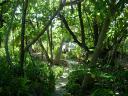 Les Chemins de l'Ile